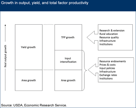 Figure 1. Growth in output, yield, and total factor productivity