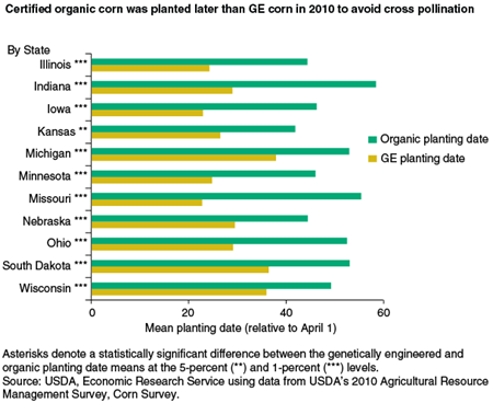 Certified organic corn was planted later than GE corn in 2010 to avoid cross pollination