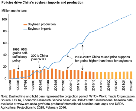 Policies drive China's soybean imports and production