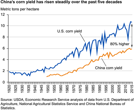 China's corn yield has risen steadily over the past five decades