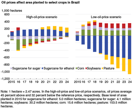 Oil prices affect area planted to select crops in Brazil