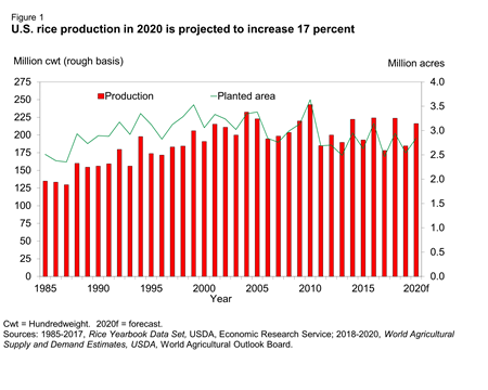 Bar chart showing U.S. Rice Production in 2020 Is Projected to Increase 17 Percent