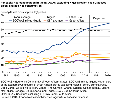 Per capita rice consumption in the ECOWAS excluding Nigeria region has surpassed global average rice consumption