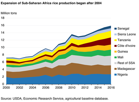 Expansion of Sub-Saharan Africa rice production began after 2004