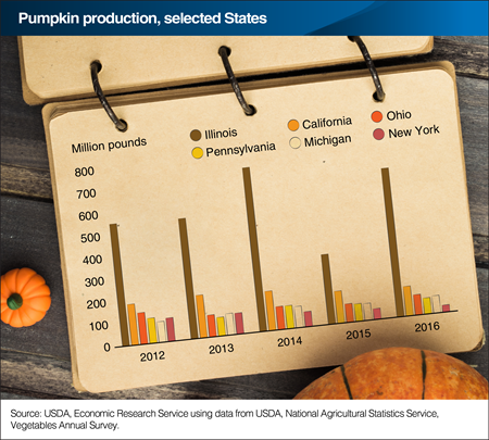 Pumpkin production in Illinois rebounds, while New York drops further in 2016