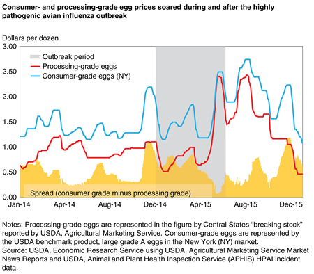 A line chart showing wholesale prices of consumer- and processing-grade egg prices and their spread from January 2014 through December 2015.