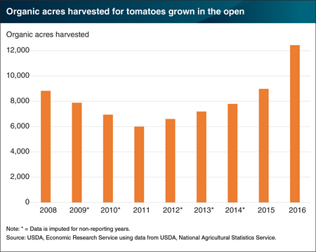 U.S. growers are harvesting an increasing amount of organic tomatoes