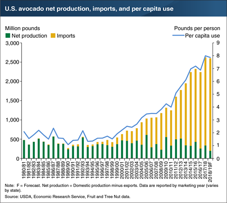 Avocado imports could rise further in 2018/19 as a weak crop outlook in California reduces domestic supply