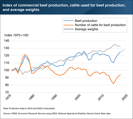 Since 1970, increasing cattle weights have fueled growth of U.S. beef production as cattle used have decreased