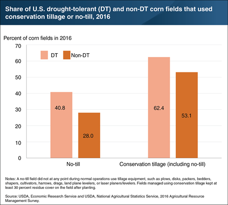 No-till and conservation tillage practices are more common on fields planted with drought-tolerant corn