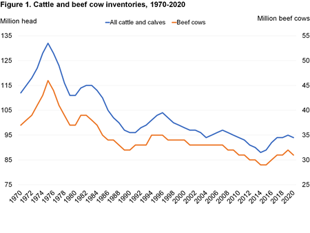 This line chart shows U.S. cattle and beef inventories from 1970 to 2020.