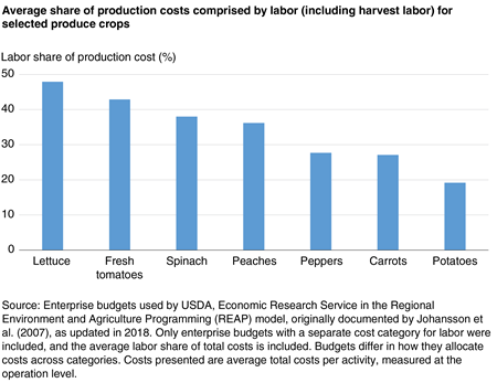 Bar chart showing average share of production costs comprised by labor (including harvest labor) for selected produce crops