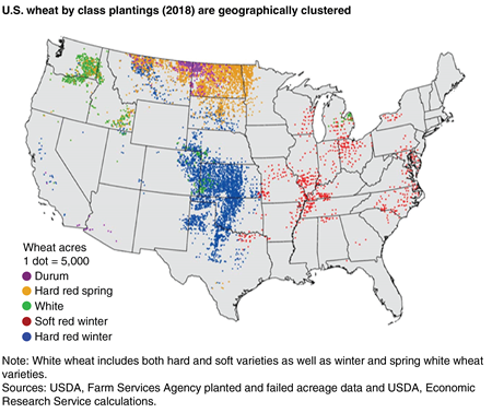A map indicating the geographical concentration of U.S. wheat plantings by class in 2018, with a large concentration of hard red winter acreage in central United States and a large cluster of hard red spring in north central United States.