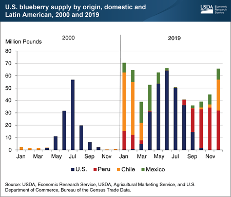 Blueberry imports from Latin America increase to meet year-round demand