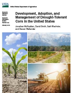 Collage of three photos showing a growing corn plant, irrigation of a corn field, a corn field after harvest